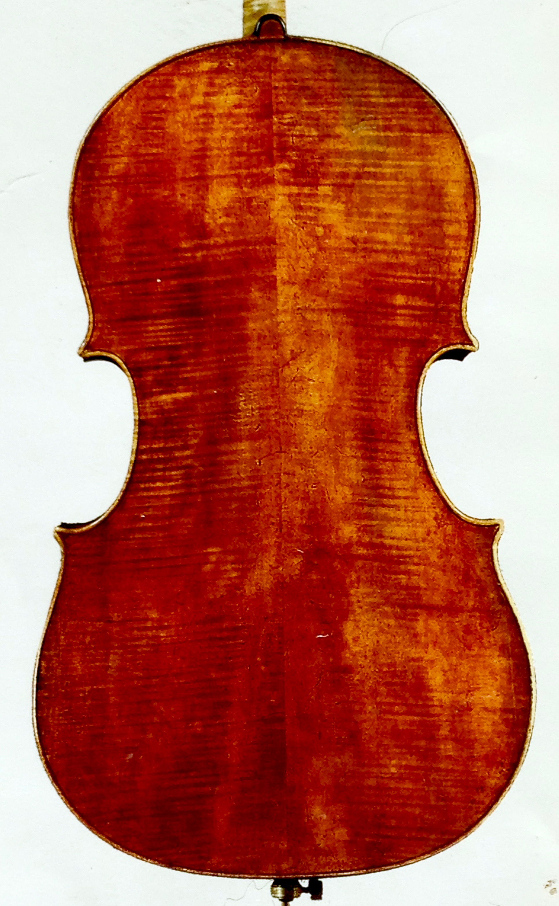 A Montagnana cello, showing the varnish wear on the back. The varnish begins to wear the moment the cello is first played.