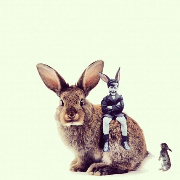 Two rabbits and me
