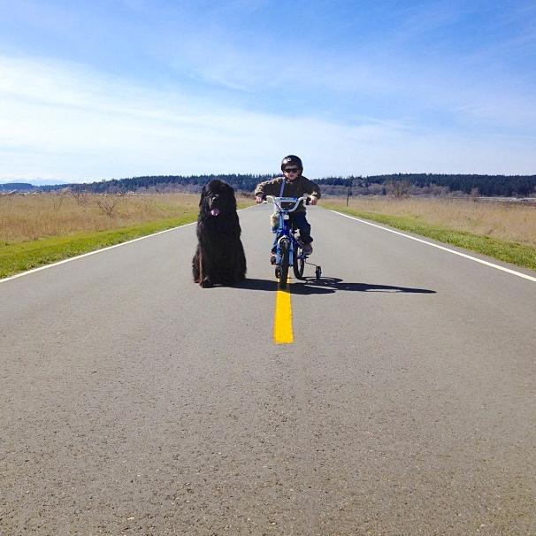 Lone rider and his dog