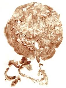placenta-1.jpg