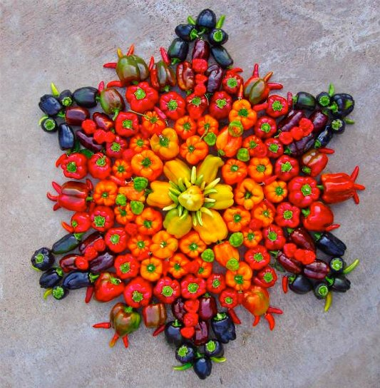 Beloved Gardens Peppers