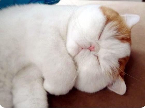 Snoopy sleeping.jpg