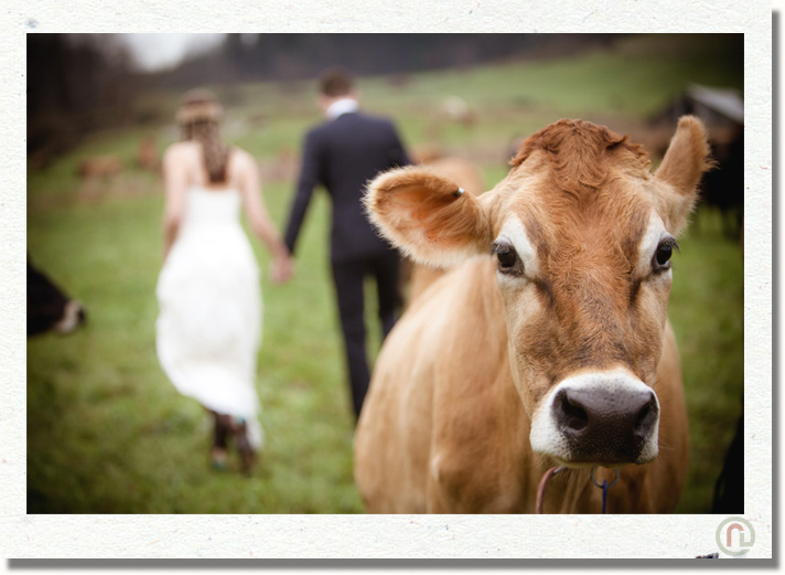 scranton_wedding_photographer_hillside_farm_33.jpg