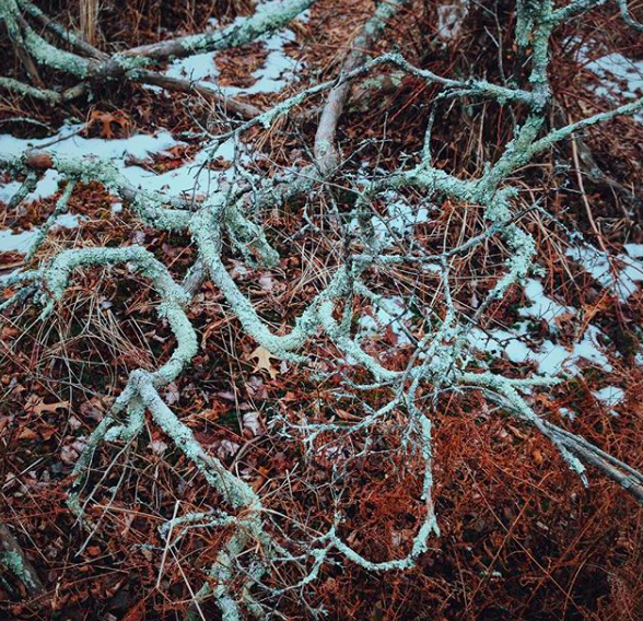 Lichen and roots - Salem, MA