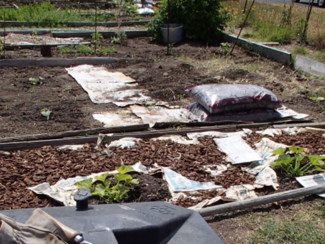 vegetable garden - before