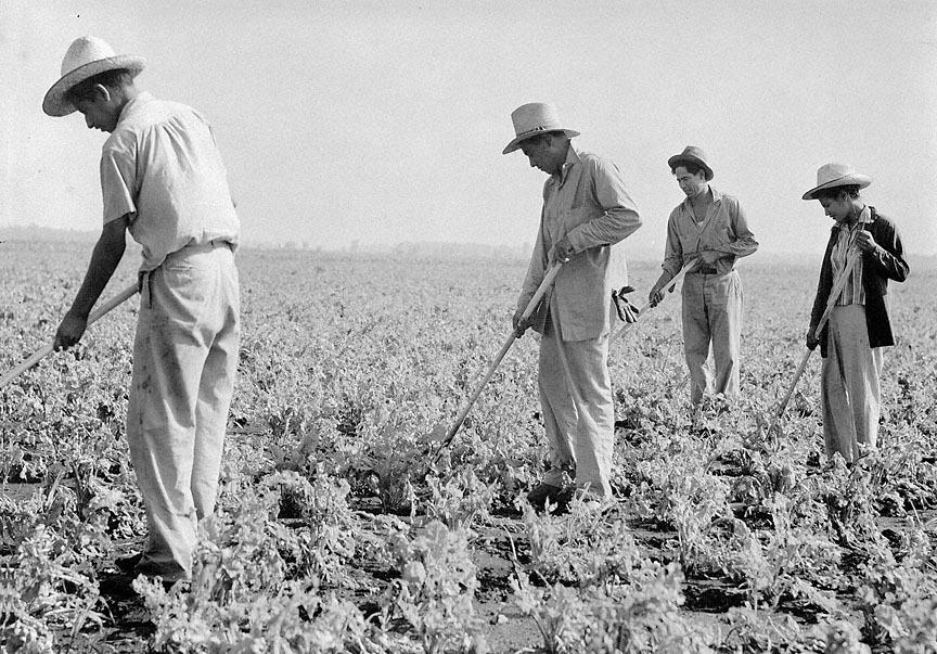 Field workers 1.jpg