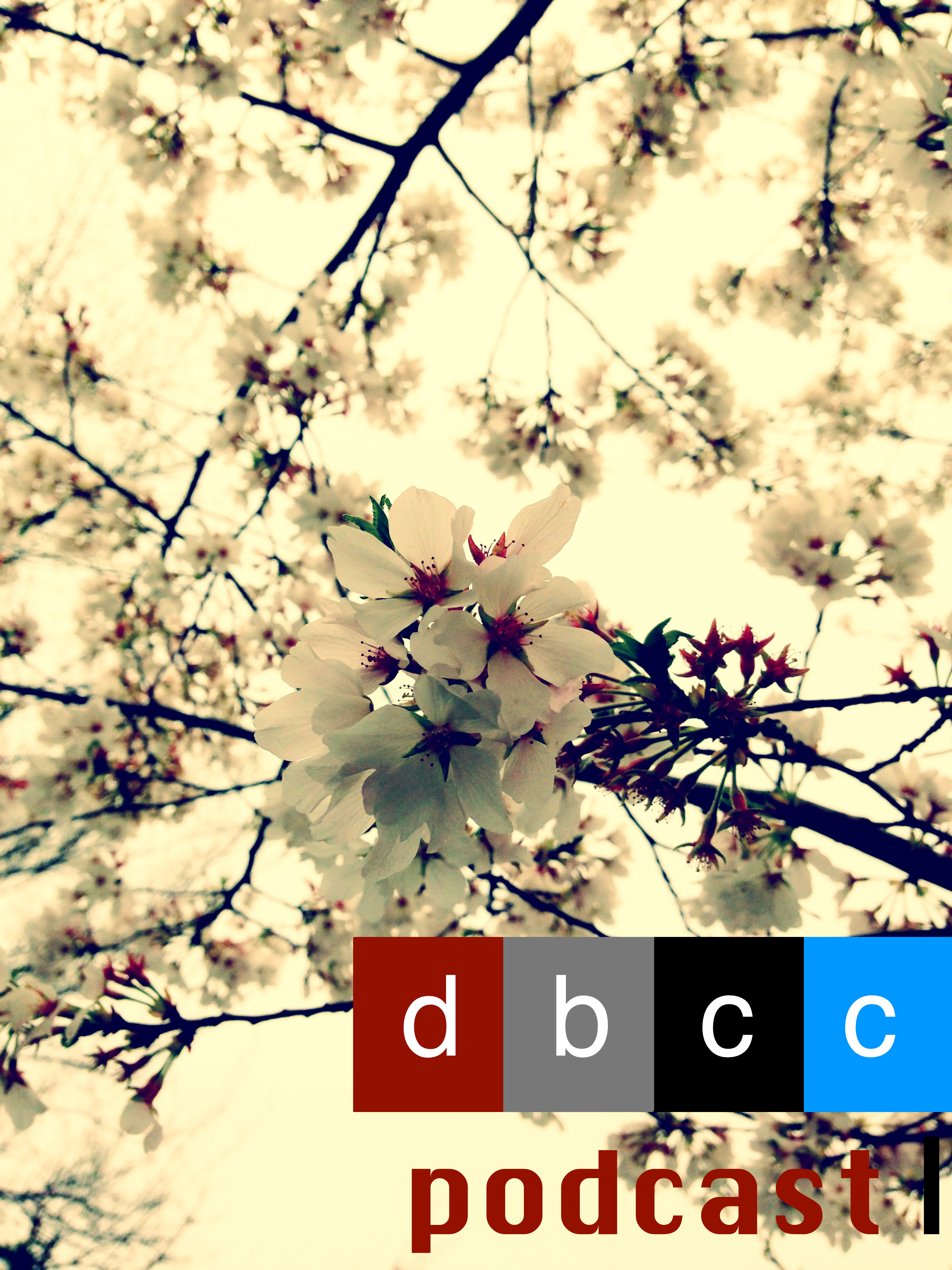 Cherry Blossom Podcast.jpg