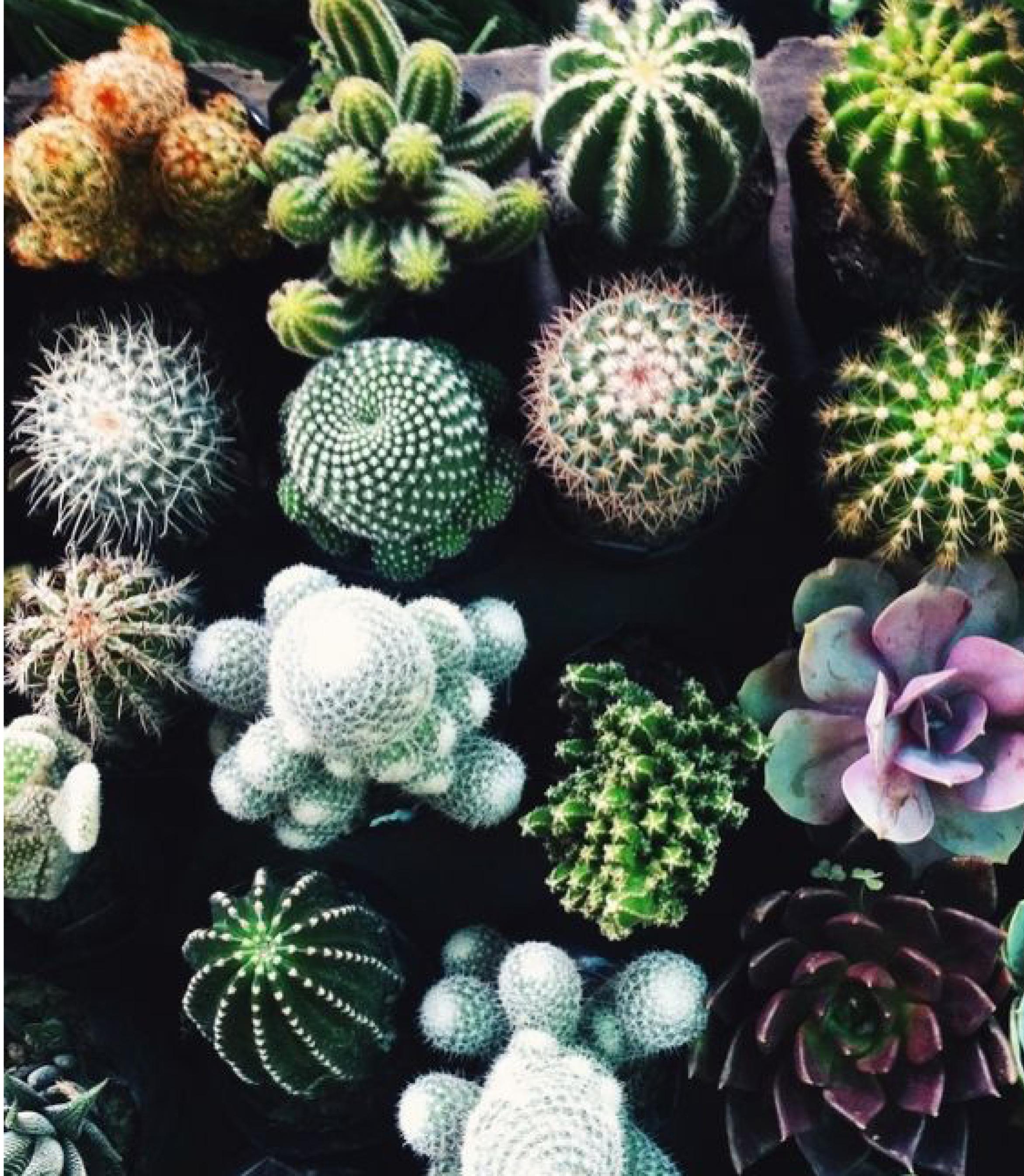 floral_3.jpg