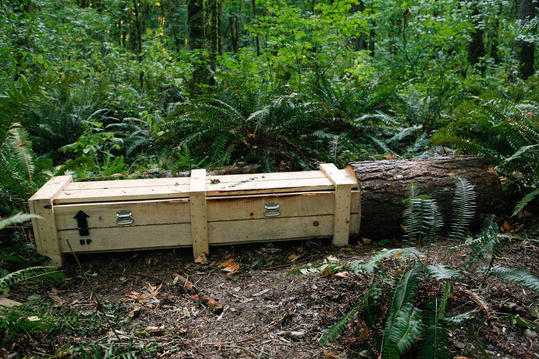 Pine-Box_The-Source-Series_imonen-8791.jpg