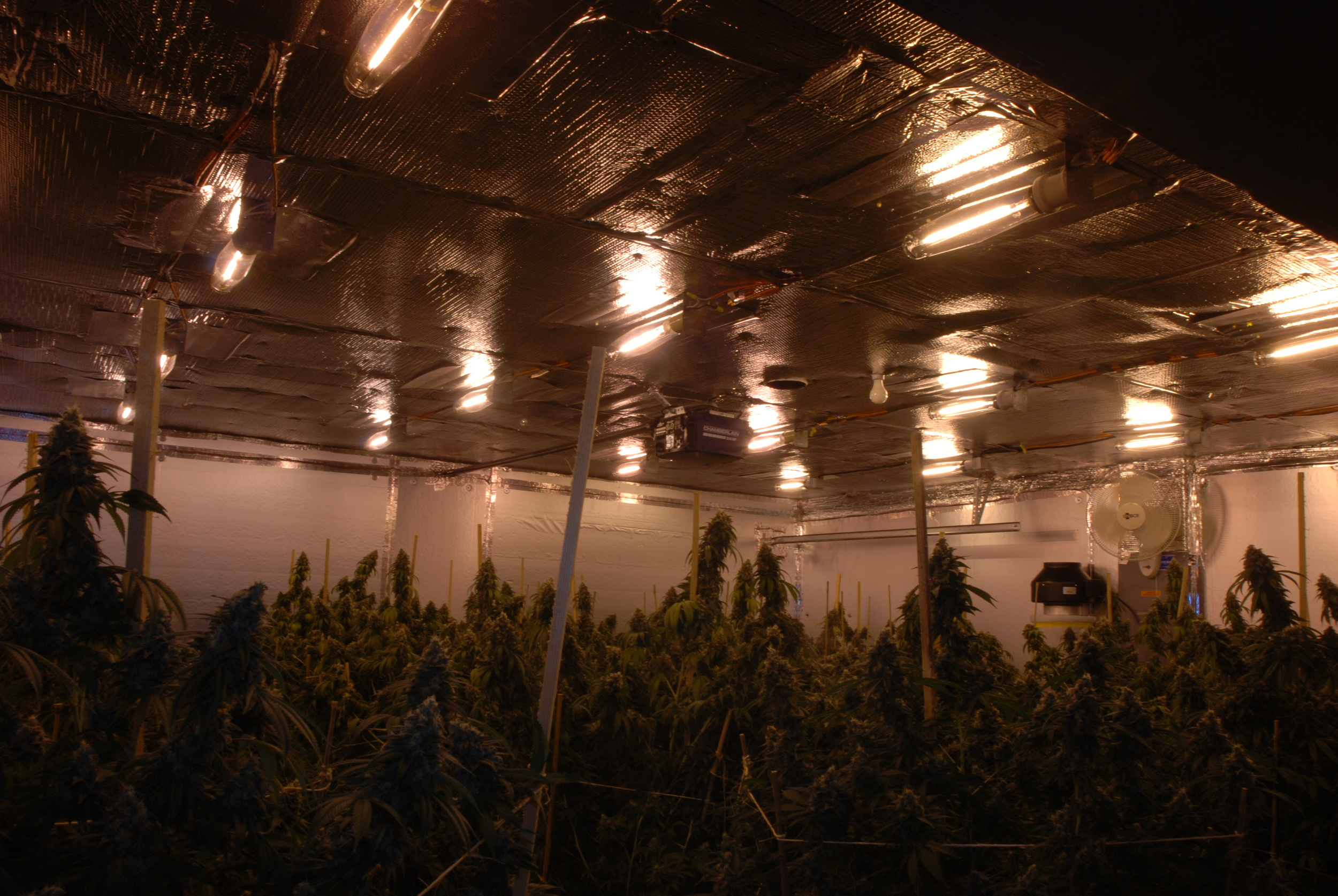 PHOTO: Images form a marijuana grow house operation taken down by theCape Coral Police Department VIN and SCU units. (Photo Courtesy ofCape Coral Police Department)