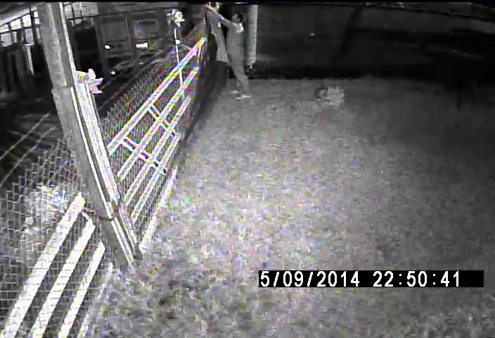 PHOTO:  Stills taken from surveillance cameras show two males in a small dark SUV enter a fenced in area and remove aluminum wire.  (Photo Courtesy of Cape Coral Police Department)