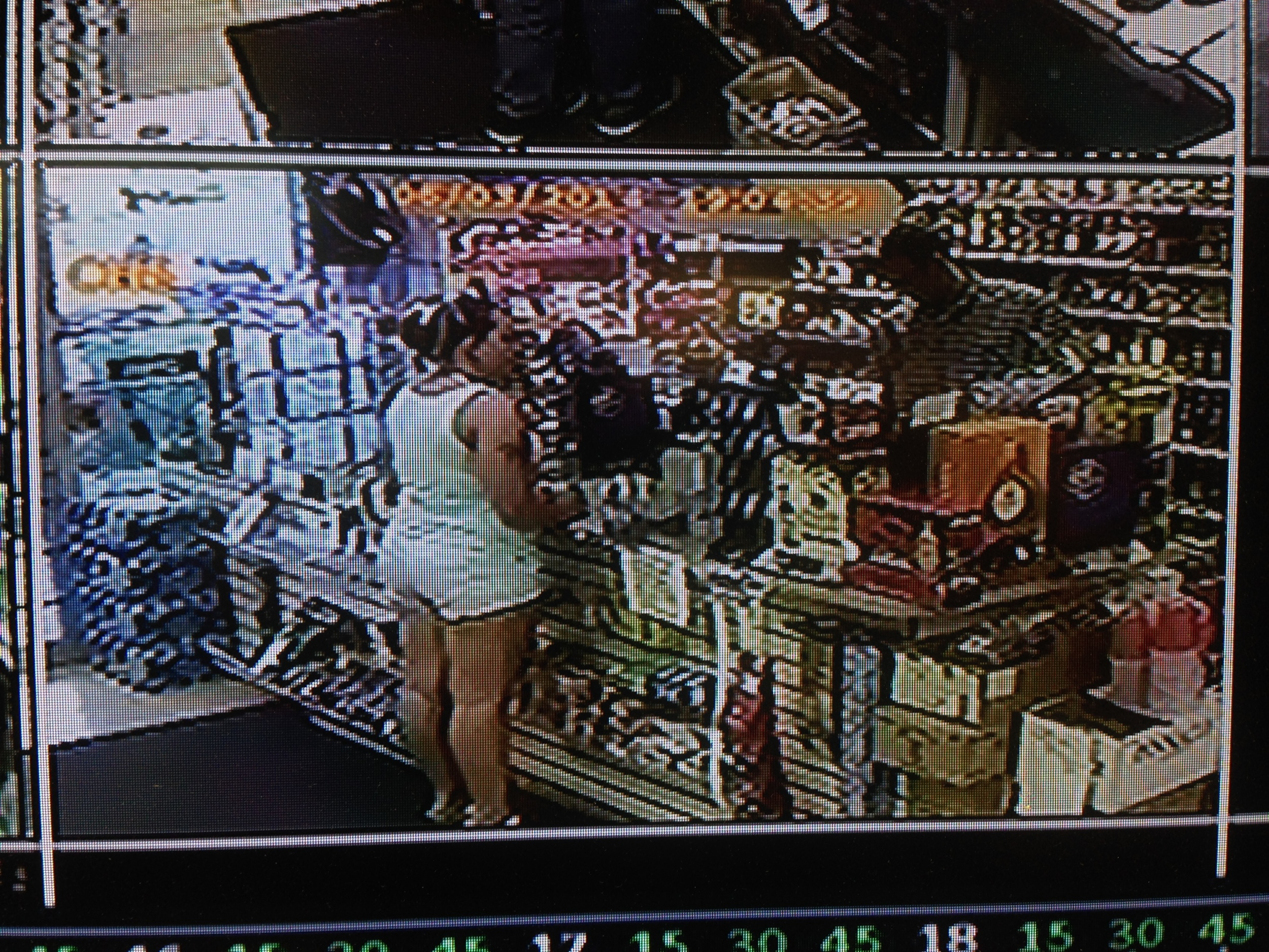 PHOTO: Stills taken from the liquor store surveillance camera show a W/F, late 30's to early 40's, with dark hair, wearing white shorts and a white tank top. She appears to have a tattoo on her right arm, below her shoulder. (Photo Courtesy of Cape Coral Police Department)