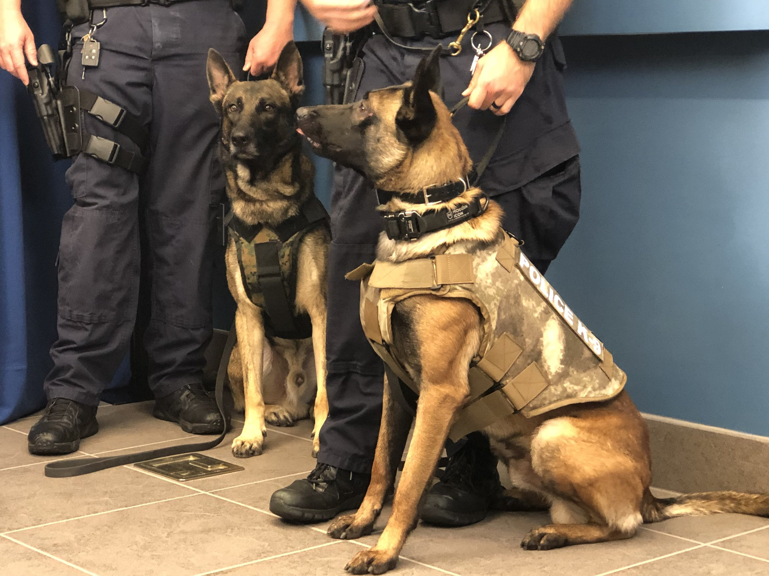 K9 Dallas and K9 Jax sporting their new vests.