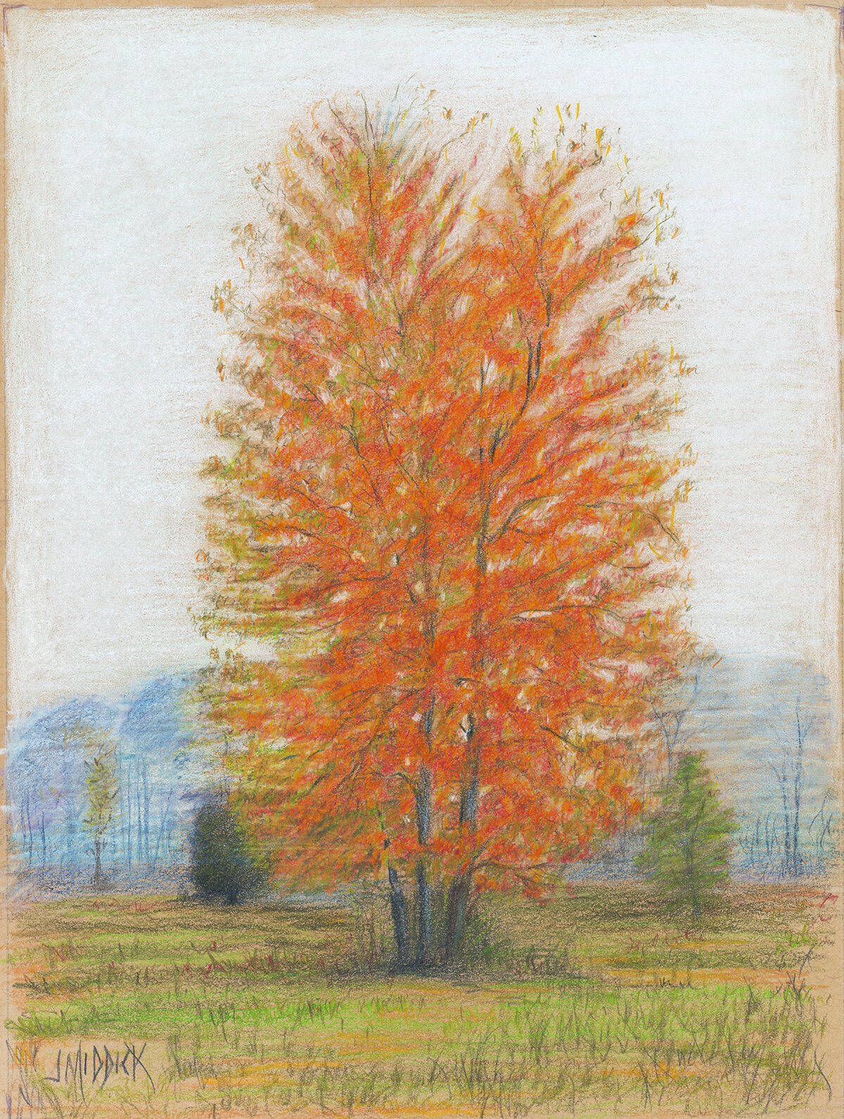 Autumn Tree Drawing in Colored Pencil.jpg