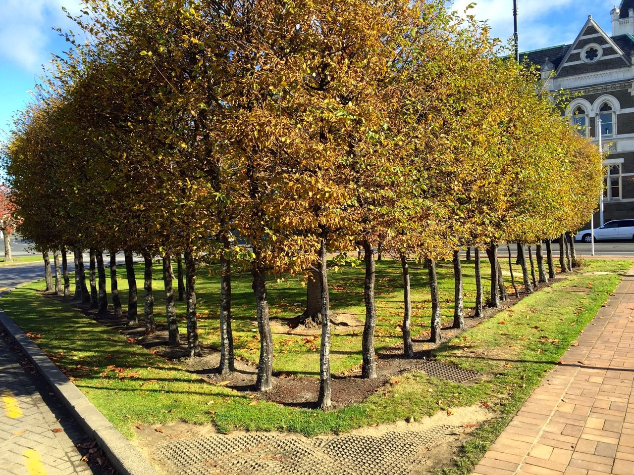 New Zealanders plant trees in the most gorgeous arrangements, all over the cities and countryside.