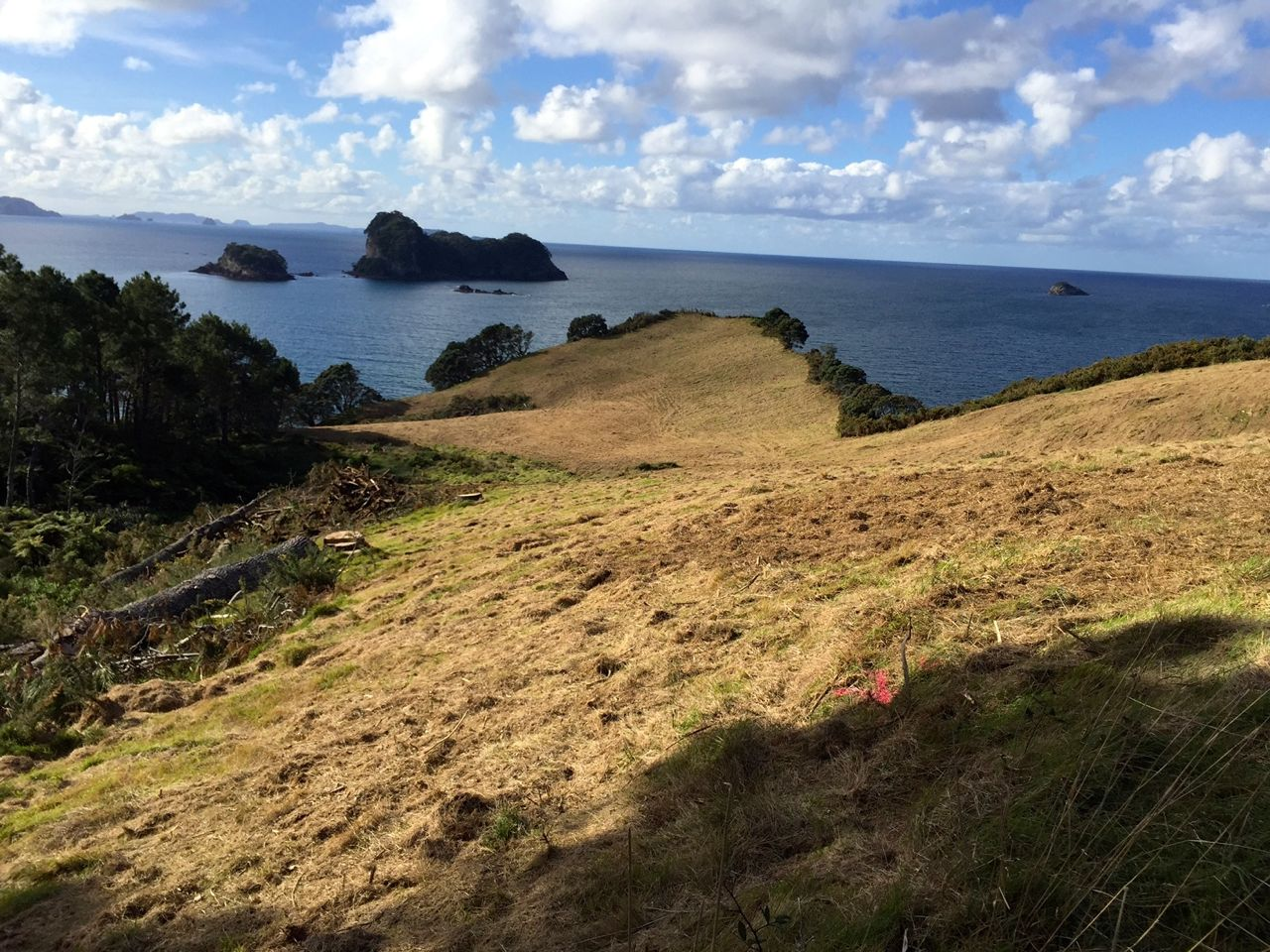 On the path down to Cathedral Cove