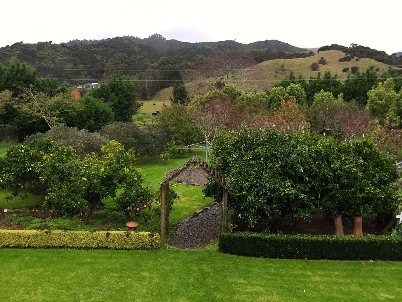 The garden at Jacaranda Lodge
