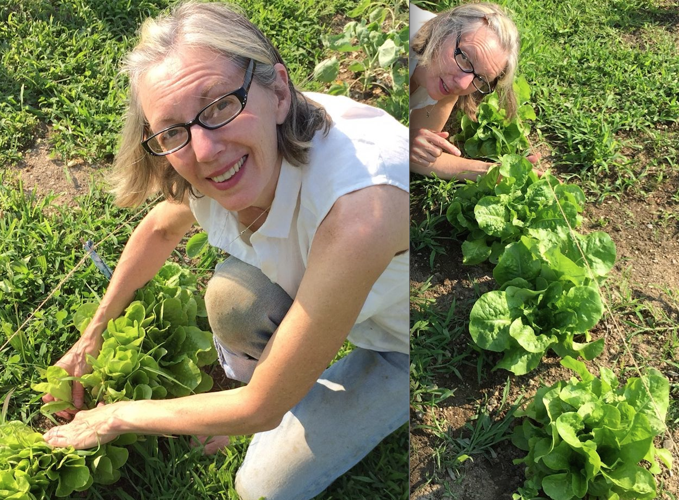 Both pictures were taken today.  All lettuce was planted at the same time.