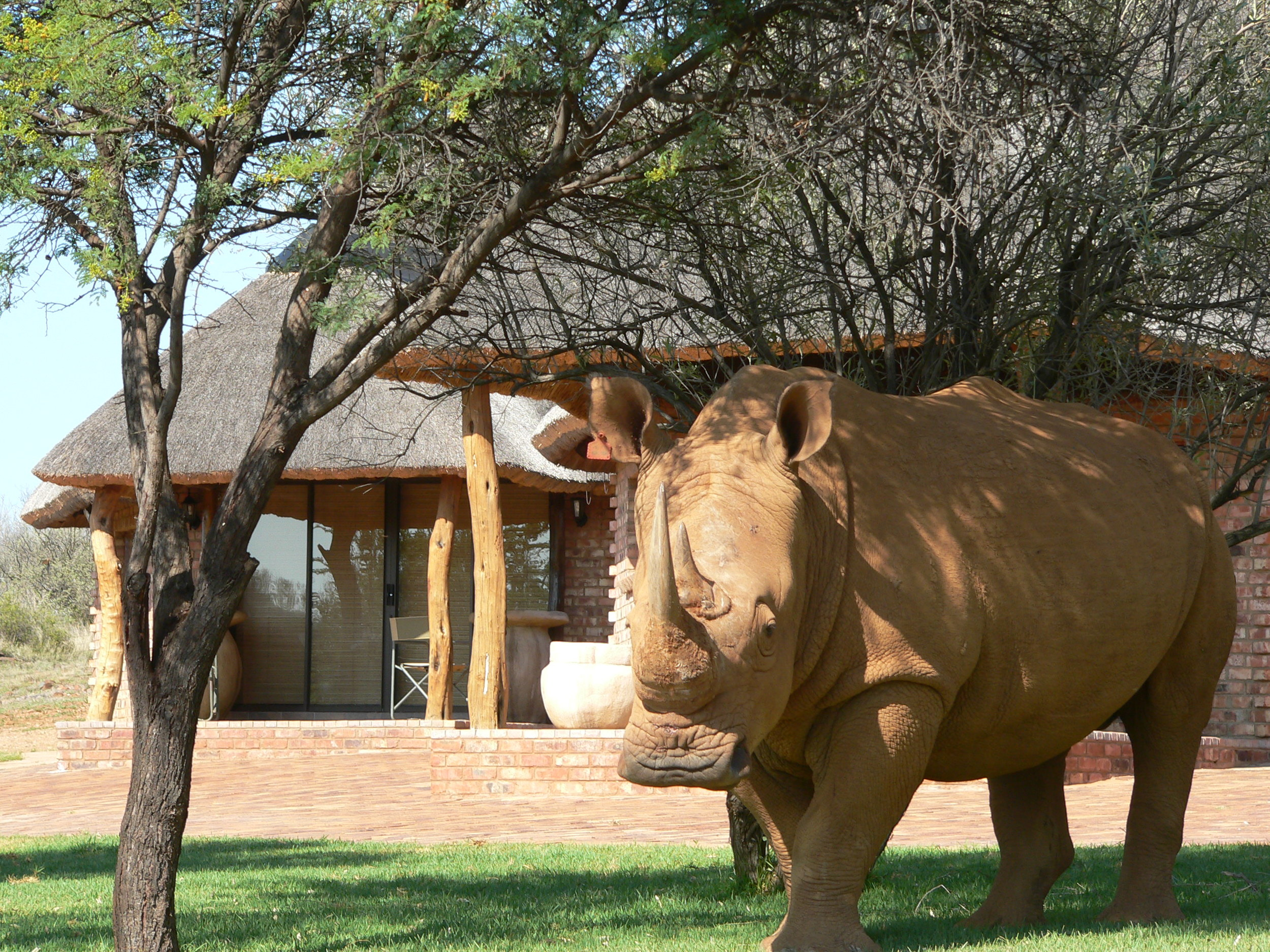 Rhino in the Camp