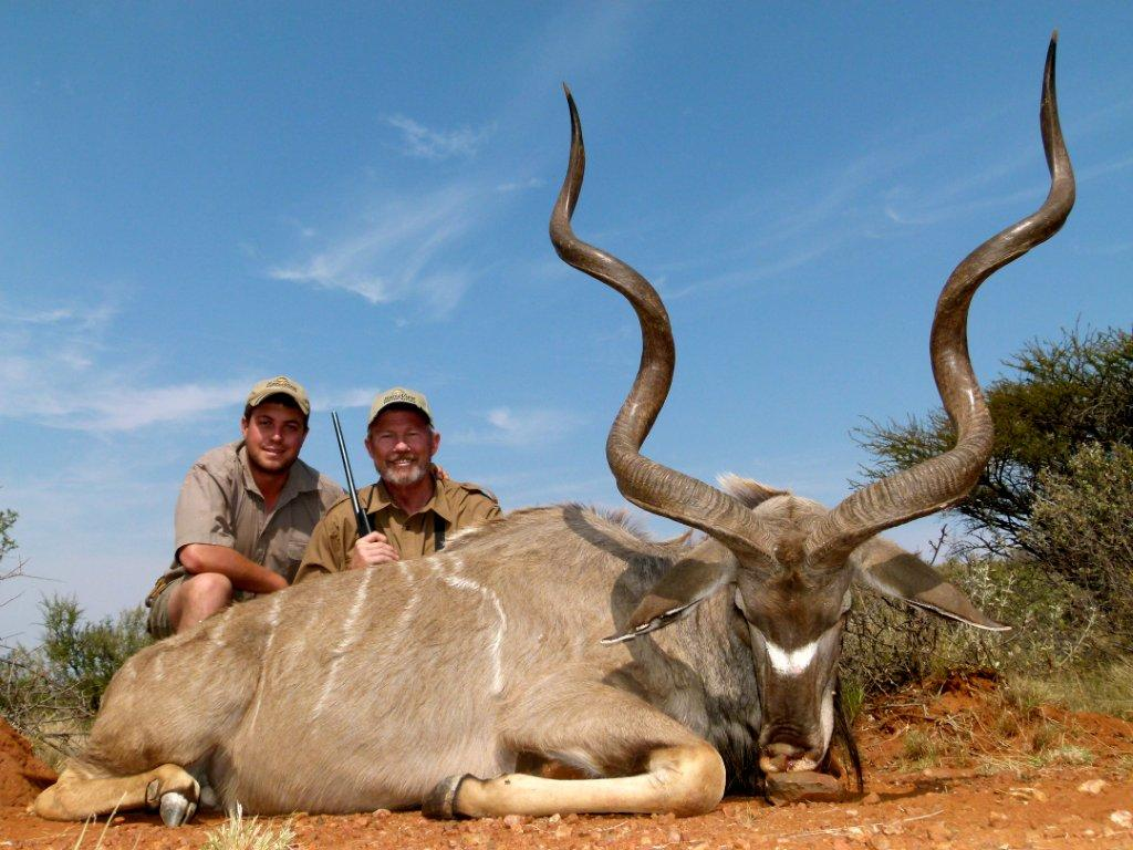 Southern Greater Kudu