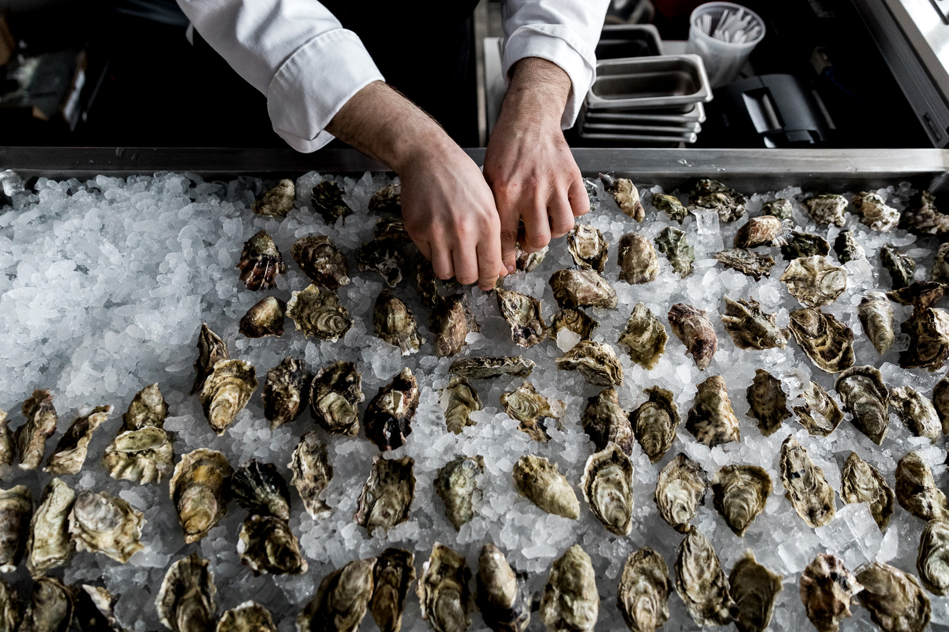 Besa Oysters