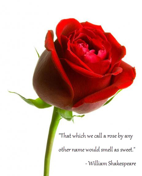 Rose Image, Shakespeare Quote - Branded Content Marketing-It's STILL Marketing 9-30-13.jpg
