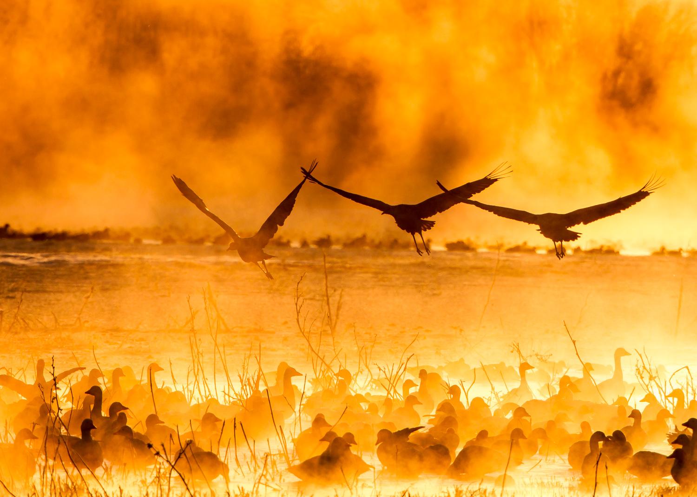 Fire Cranes.jpg
