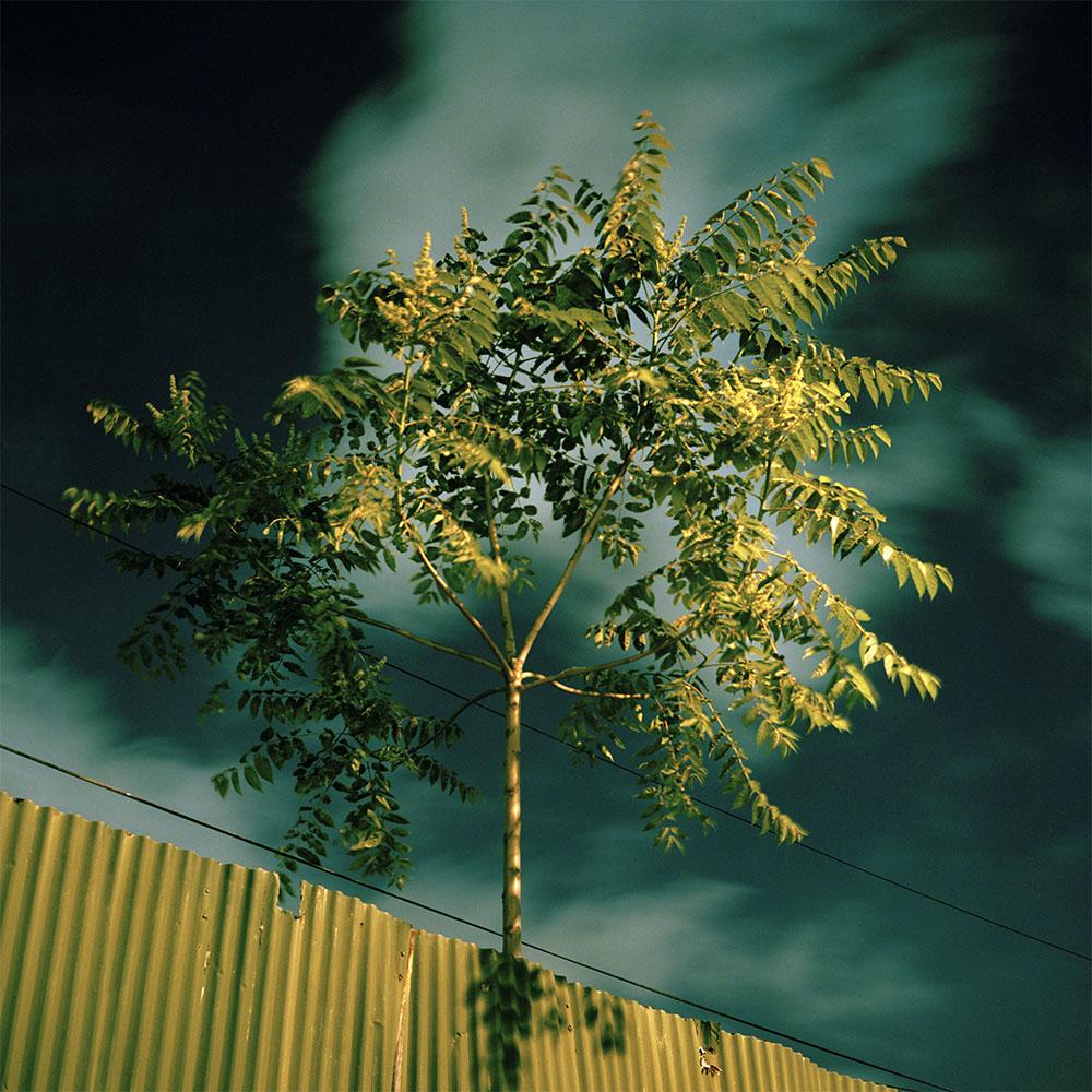 gowanus_1000_0004_tree_fence.jpg