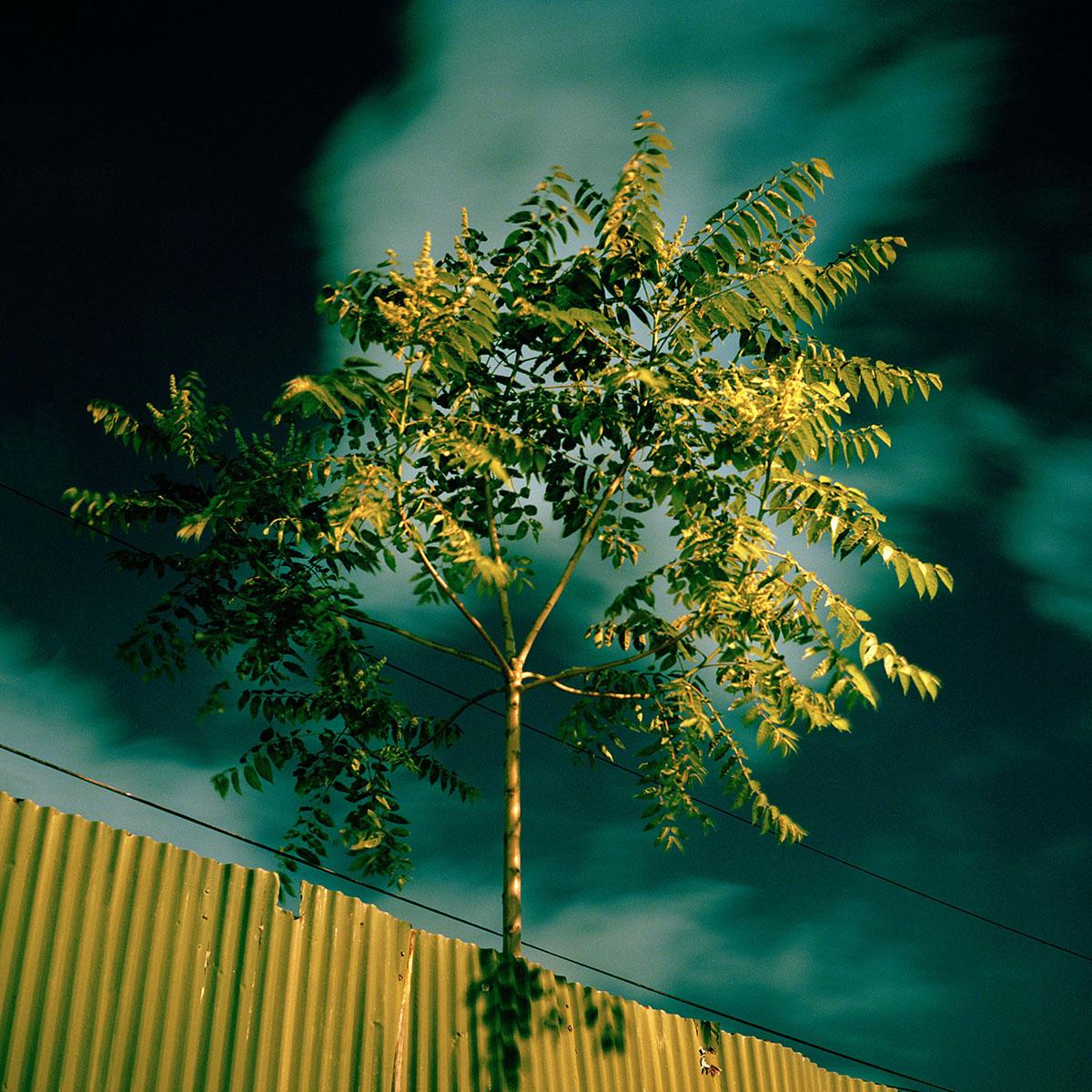 08-Draskoczy-CorrugatedTree.jpg
