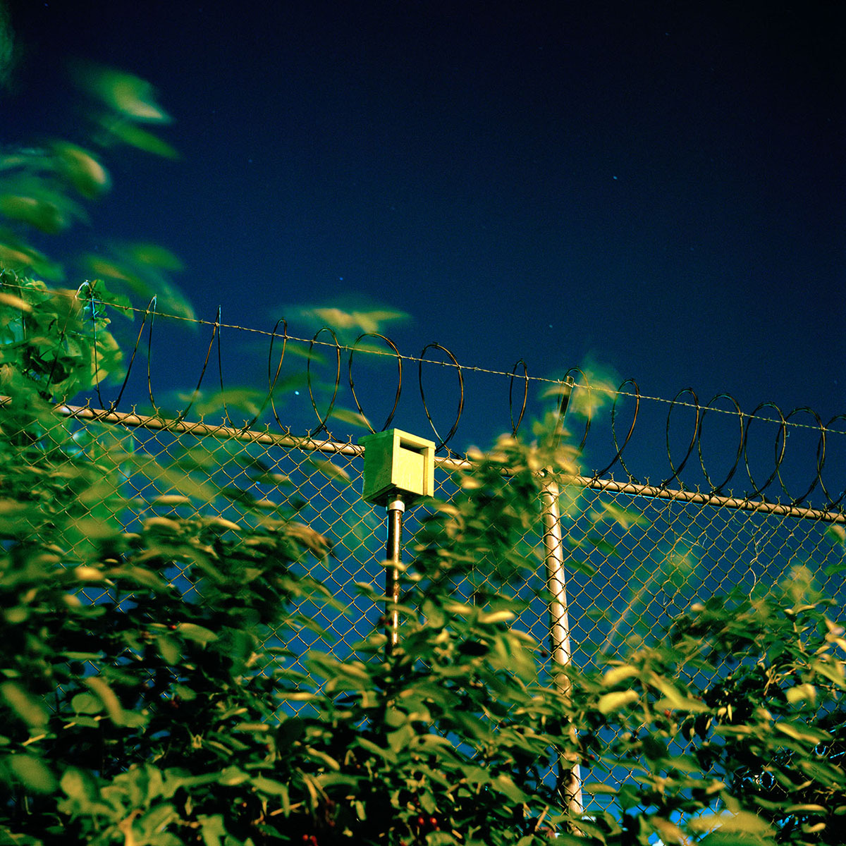 09-Draskoczy-BirdHouse.jpg