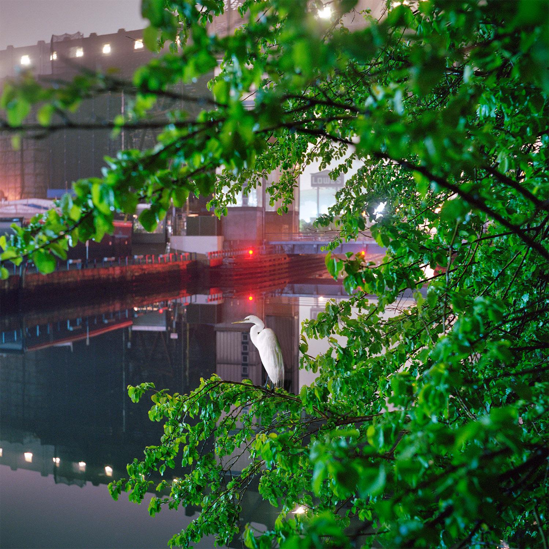 'Egret', from the series  Gowanus Wild