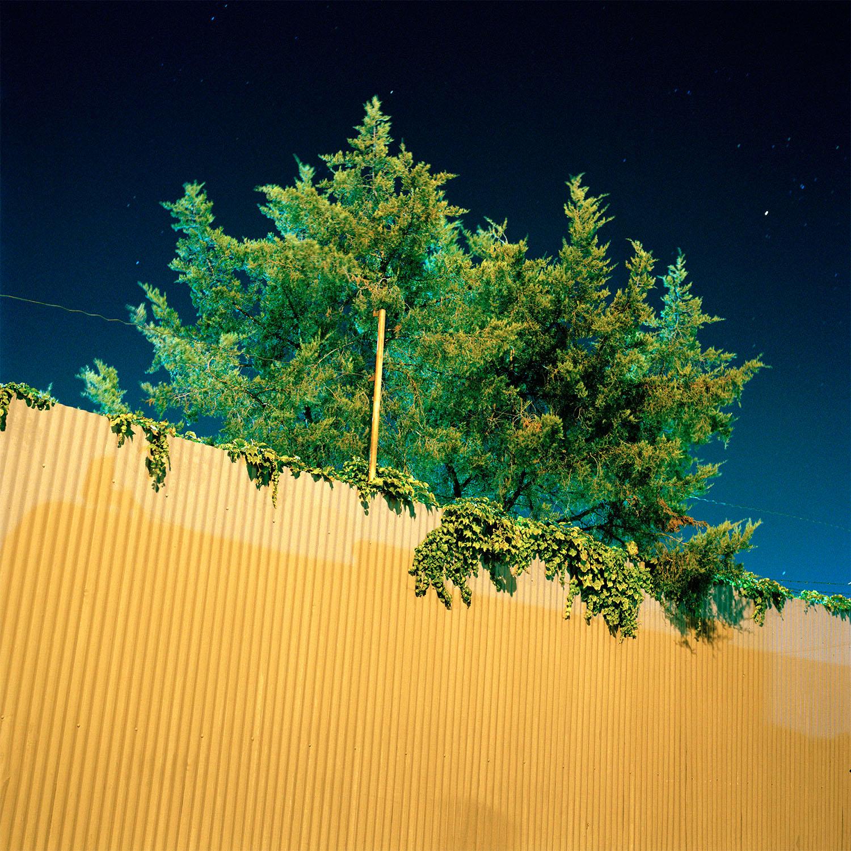 Fluorescent Tree, 2013