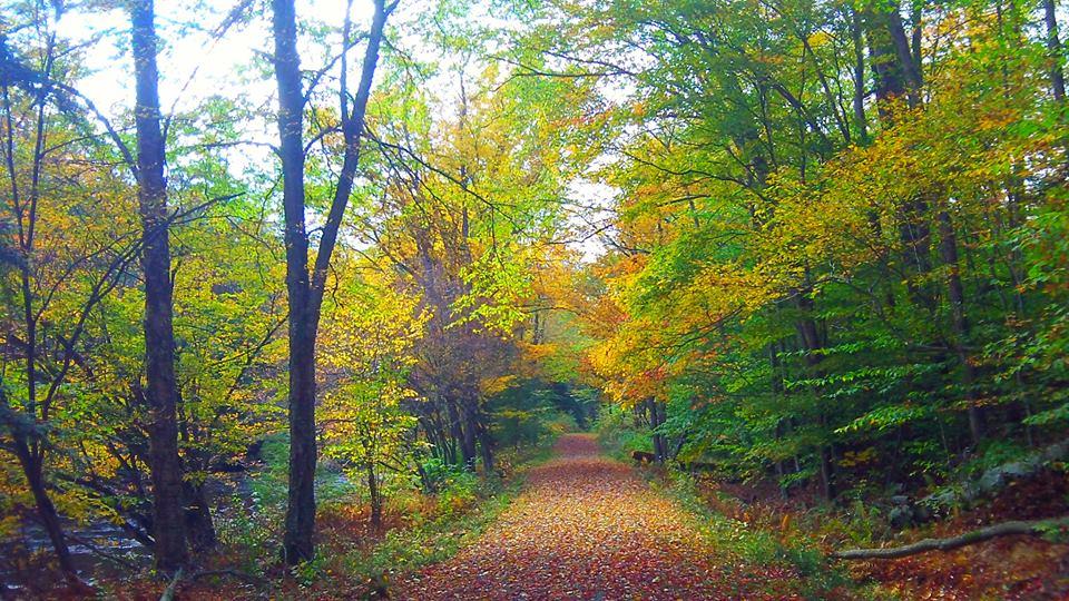 fall on the trail 3.jpg