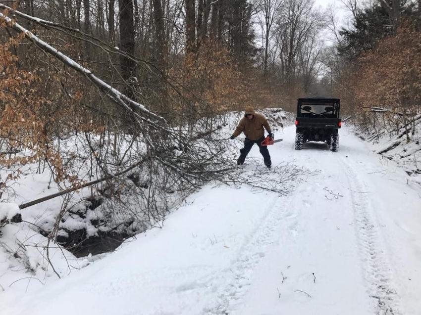 winter damage 2018a.jpg