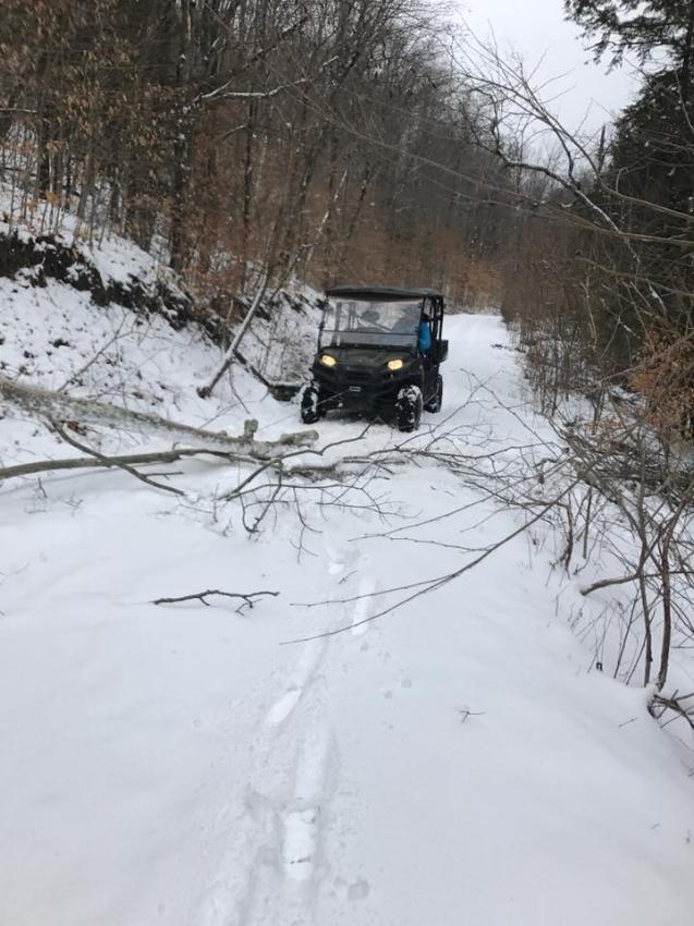 winter damage 2018b.jpg