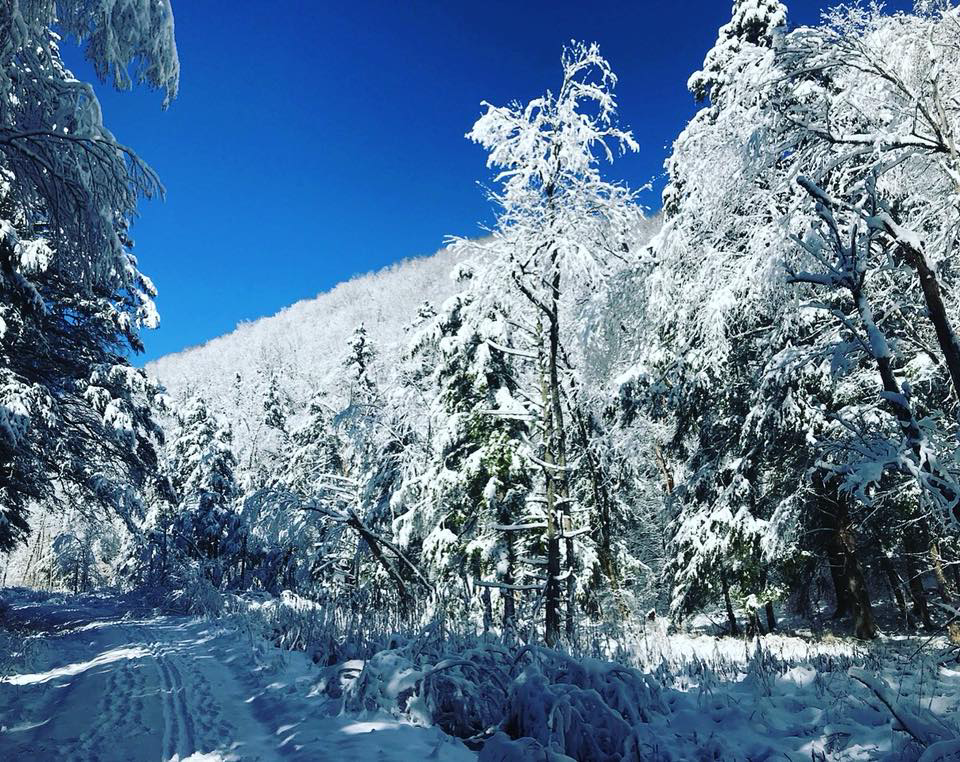 snowytrees18.jpg