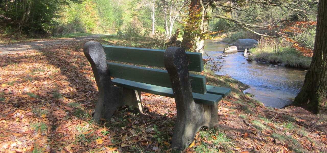 bench+autumn.jpg