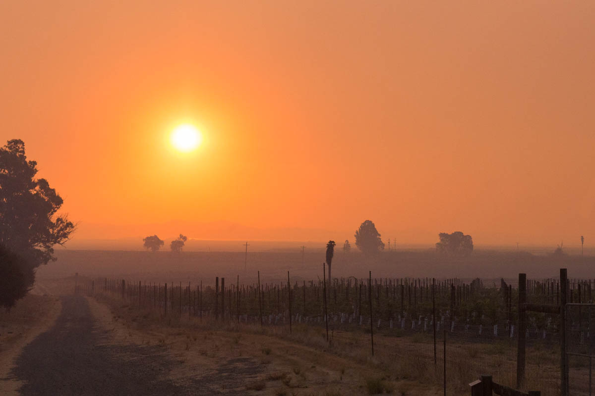 Smoke blots out the sun above a vineyard as parts of the city of Sonoma received new mandatory evacuation orders. Multiple fires across 4 counties had burned nearly 200,000 acres, displaced 100,000 people and left at least 41 dead. 10/15/17