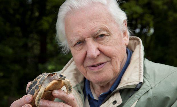 Sir David Attenborough  image - BBC