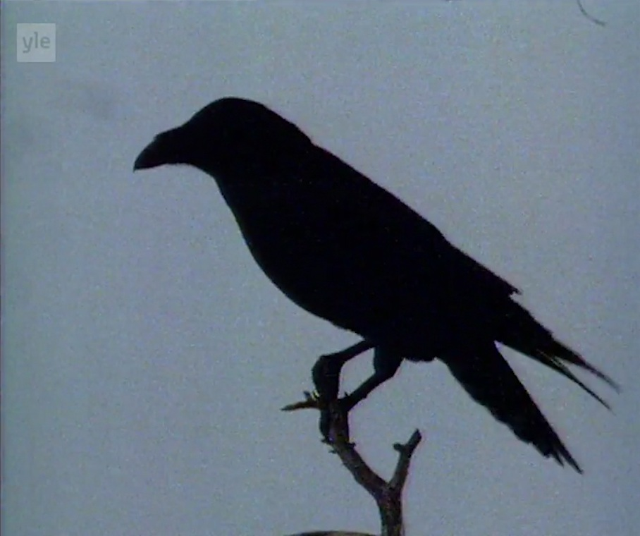 Raven+1.jpg