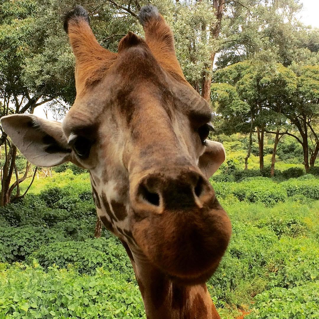 giraffee face.jpg