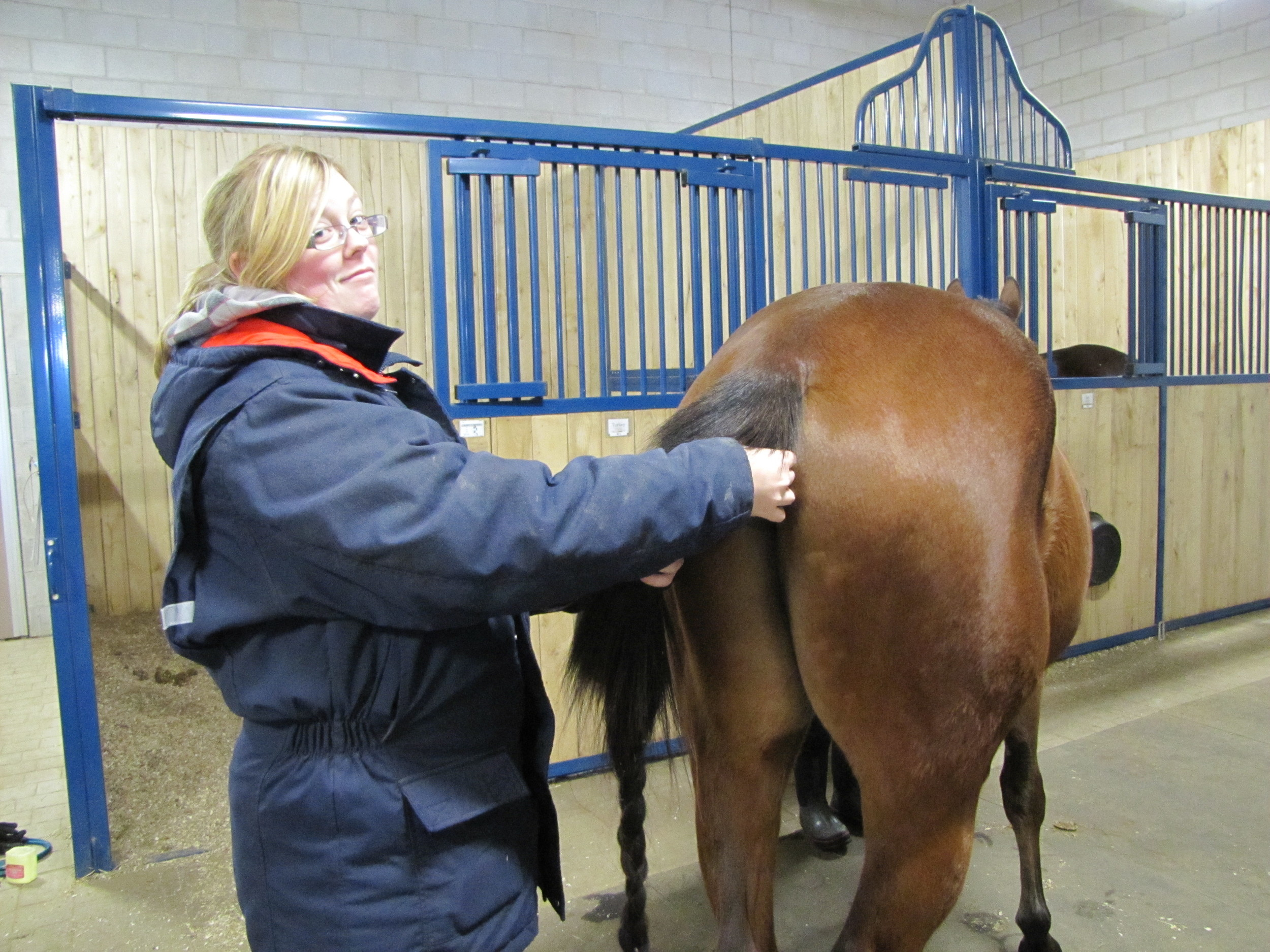 Rectal Temps as part of horse health check!