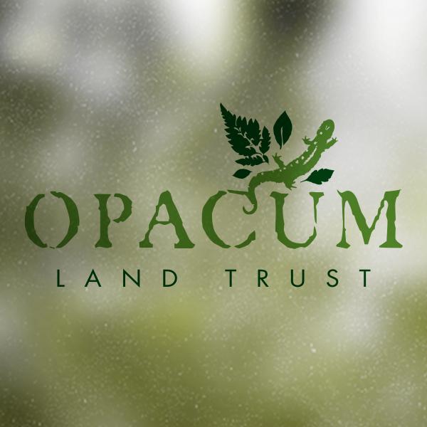 Opacum.jpg