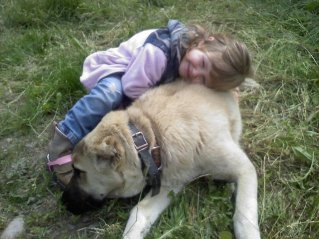 The Turkish Boz Shepherd is perfectly content as a cuddly pillow, best friend, and watchful protector for a child.  The Turkish Boz Shepherd is NOT a naturally aggressive, fighting breed.