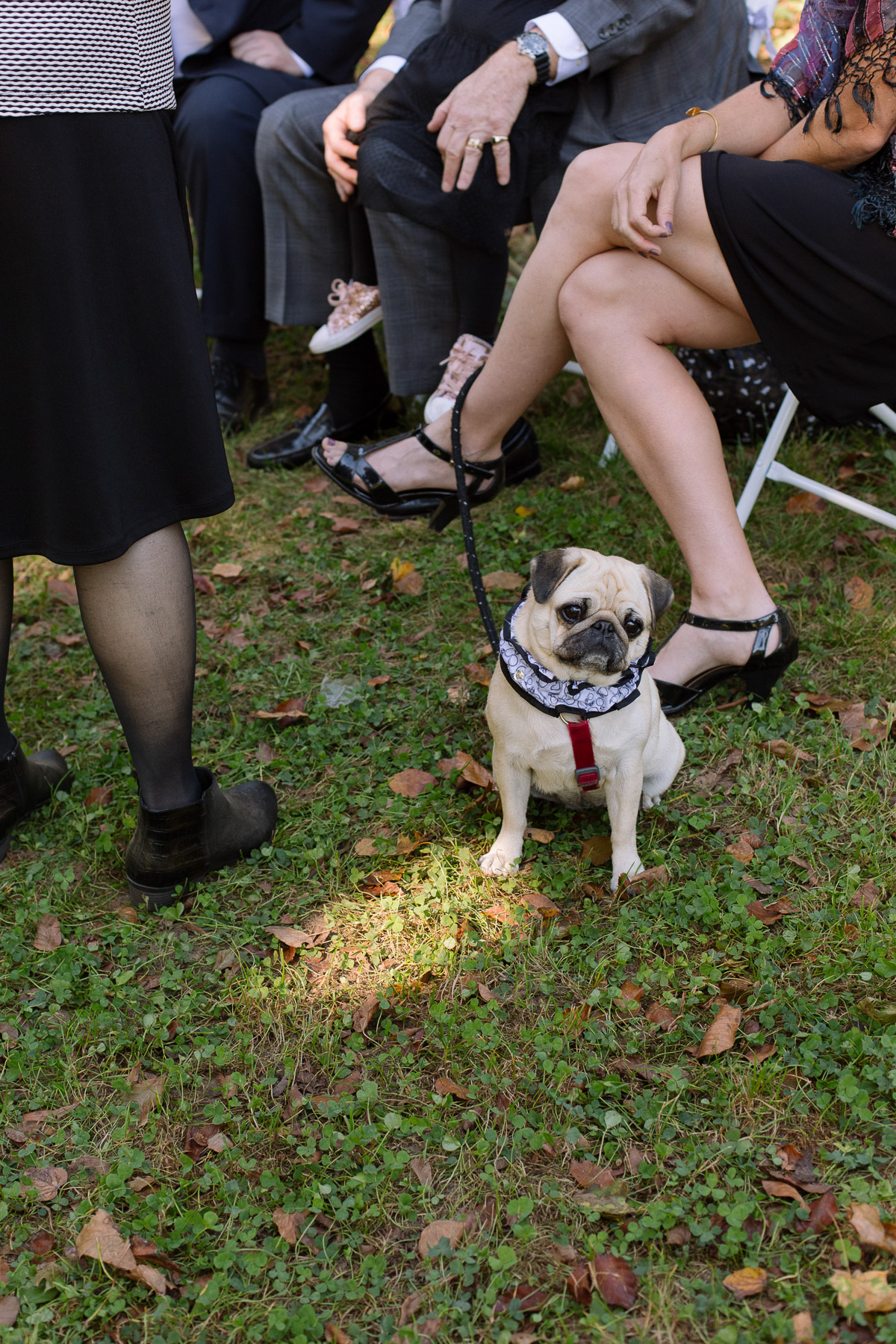 dogs at weddings candid nontraditional non-cheesy wedding photographer nyc brooklyn prospect park