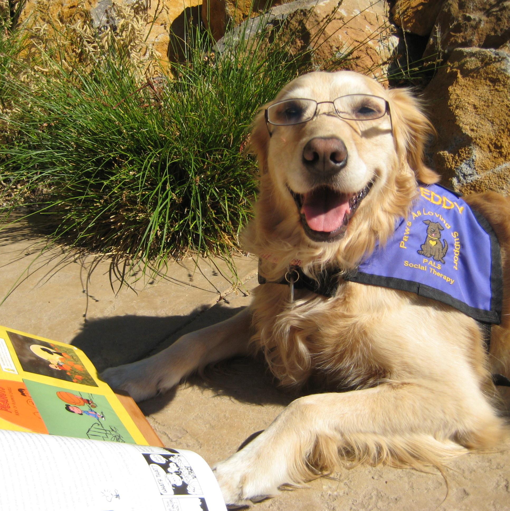 Seddy Reading Buddy.jpg