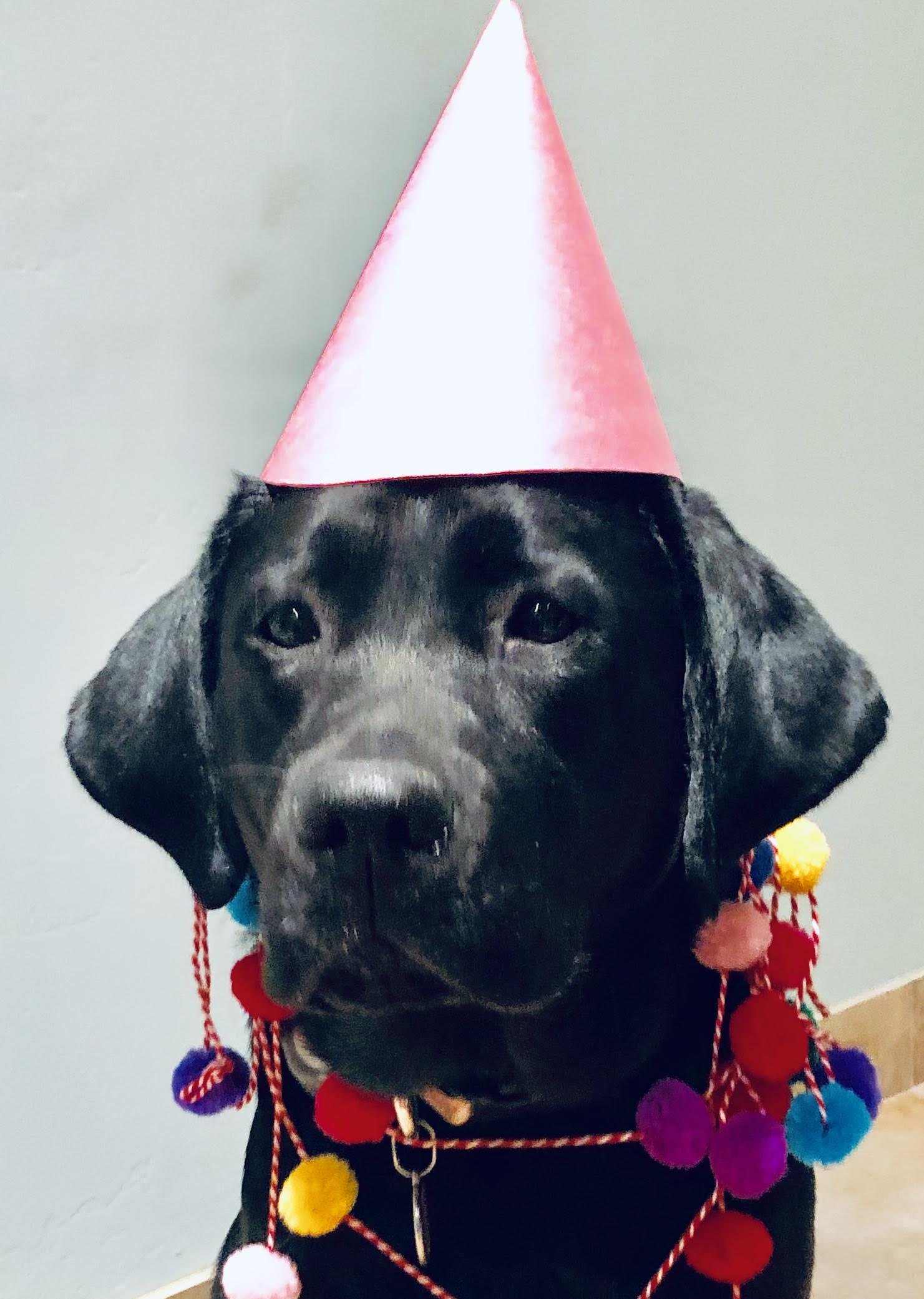tesla birthday hat.jpg