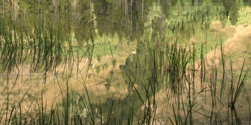 Japanese Grasses-Reflection I