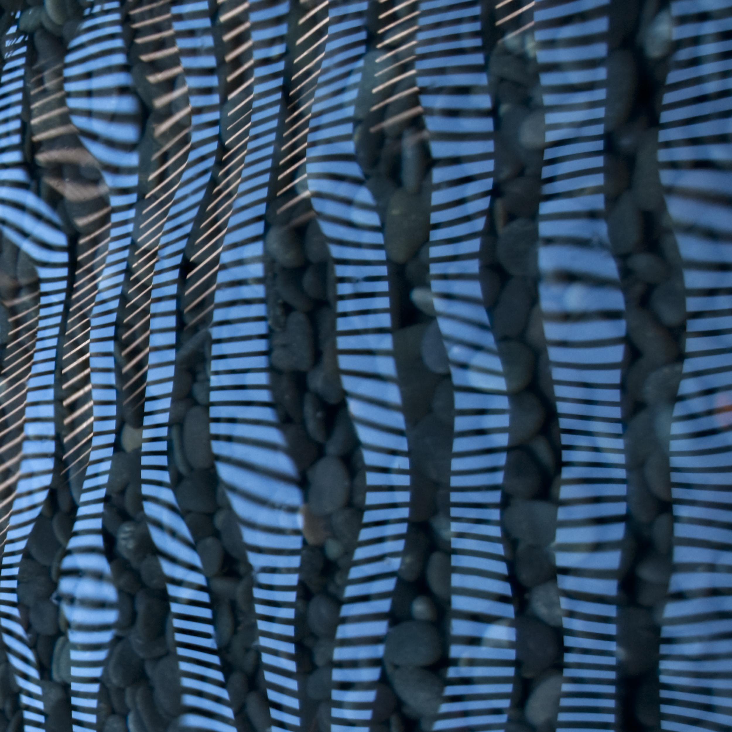 Blue Zebra III