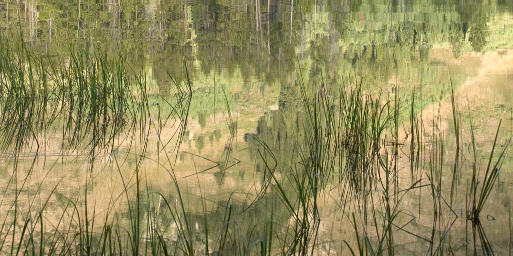 Japanese Grasses - Reflection I